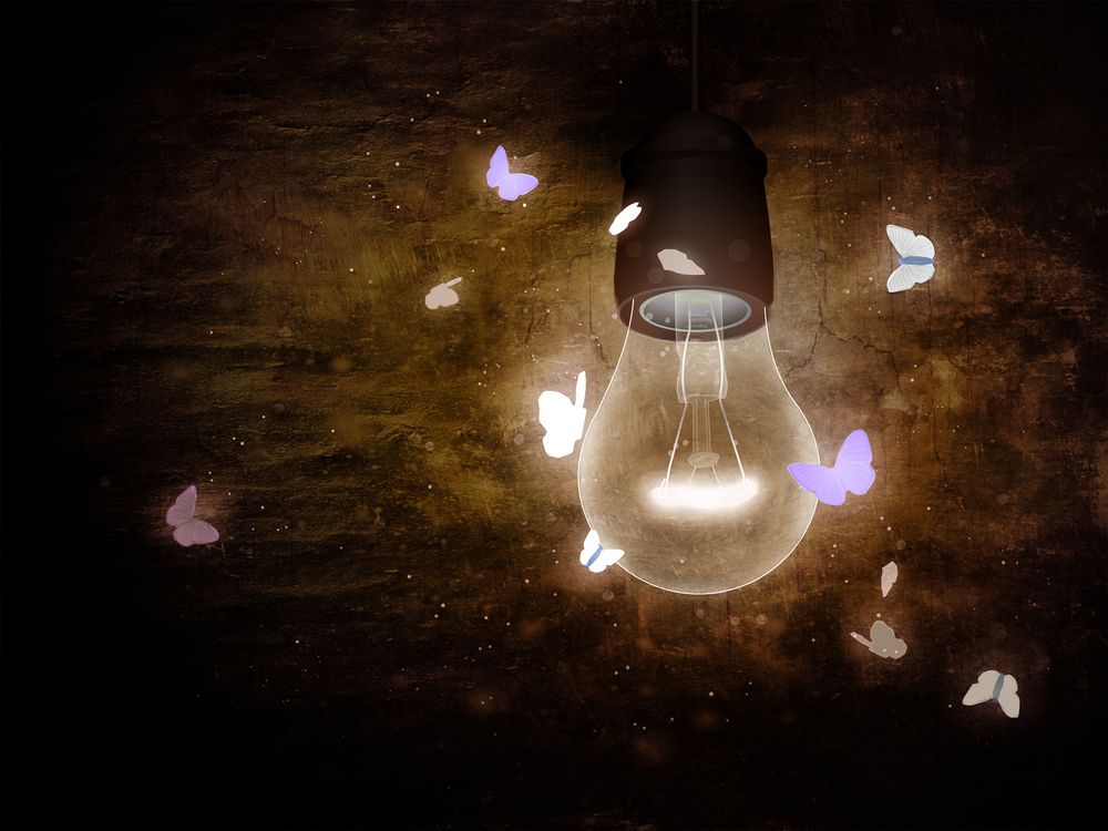 Navigating by Feedback: What Leaders and Moths Have in Common ...:Navigating by Feedback: What Leaders and Moths Have in Common,Lighting